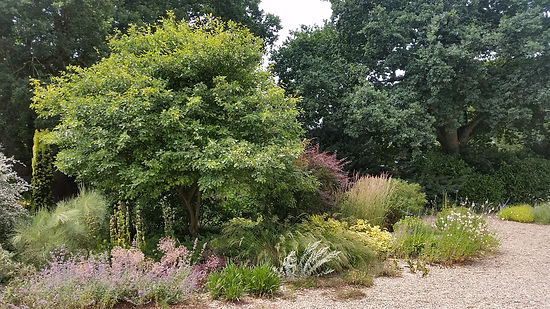Studio Cullis Beth Chatto Amelanchier tree in dry gravel planting scheme