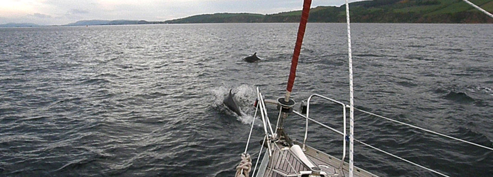 Eloise, Yacht Charter with dolphins