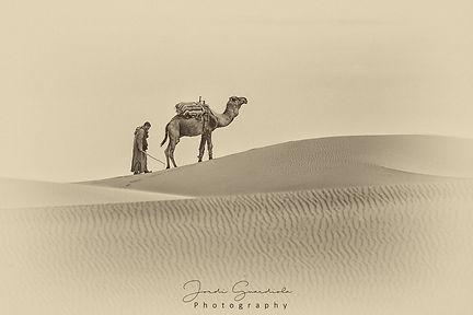 dromedario dunas marruecos.jpg