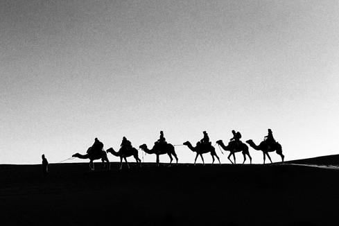 dromedary caravan