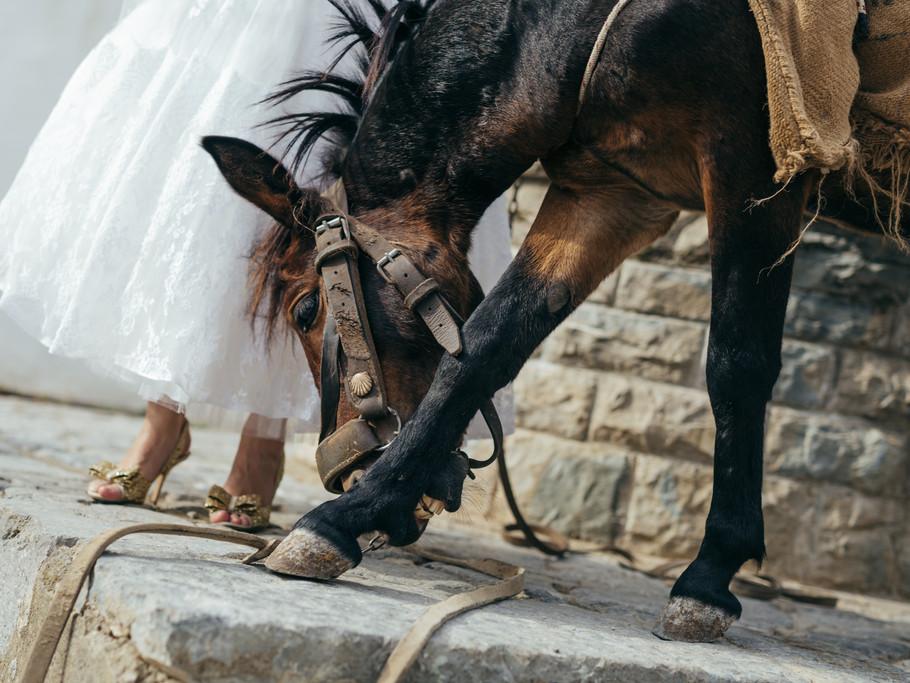 Photographer:  Two Blushing Pilgrims