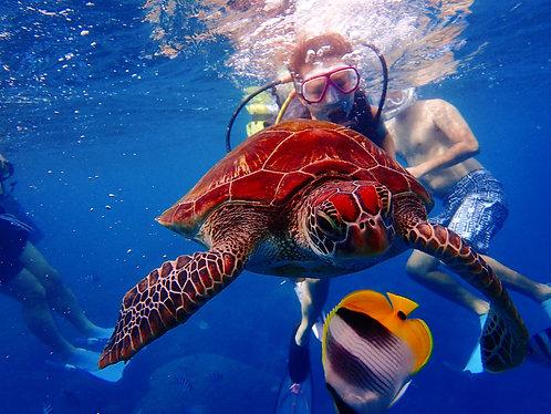 體驗潛水 Introductory Dive
