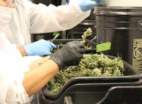 Investigation of marijuana lab testing by Nevada regulators