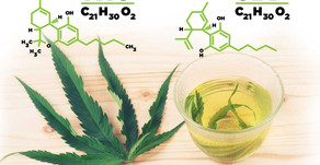 CBD Vs THC: The Endocannabinoid System Turned How We View Cannabis