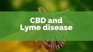 Lyme Disease? Consider CBD for Relief