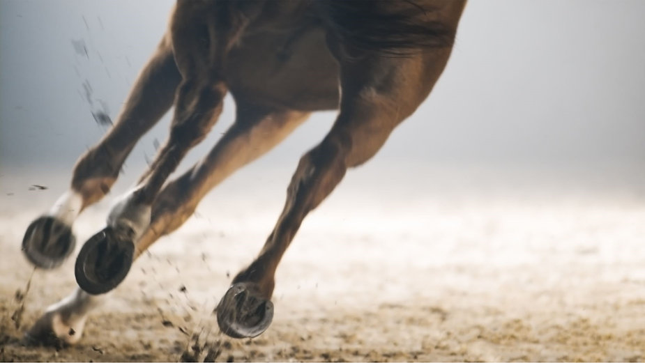 Horse Physiotherapy
