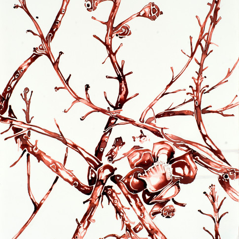 Botanica II
