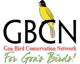 GBCN Logo_New(1)_edited_edited.png