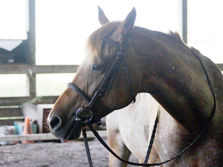 Learning to Let Go: What Horses Can Teach Us About Radical Acceptance