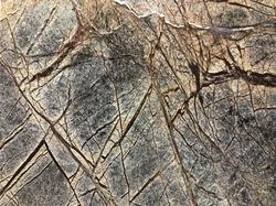 Rainforest Brown Indian Stone