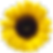Sunflower Valley Farm