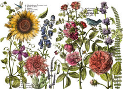5BIOJbrKT6KShRYu13eg_IOD_DT_Botanist_s_J