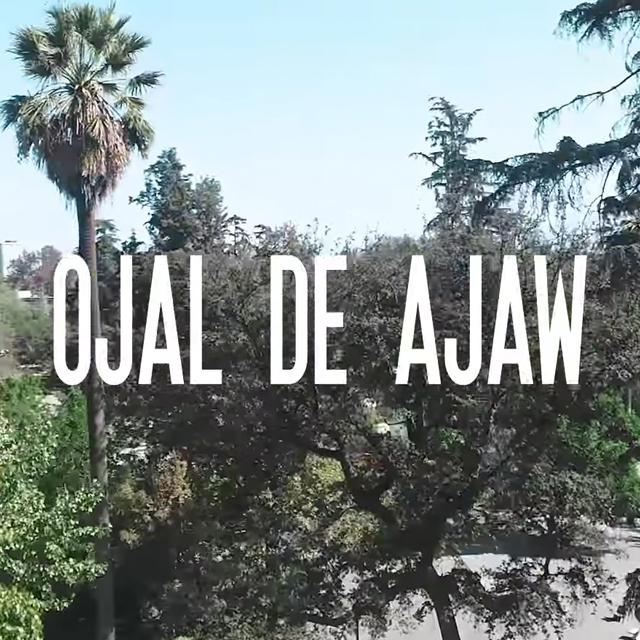 Ojal de Ajaw - Pupilas