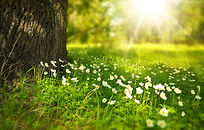 spring_276014_1920_edited.jpg