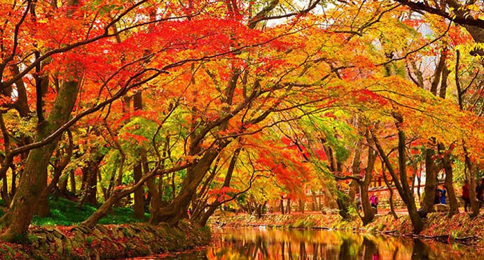 autumn-leaves-1309190_1280.jpg