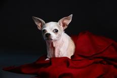 Geri (Adopted!)