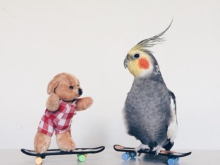 """Mascotas """"Celebrity"""" en Instagram"""