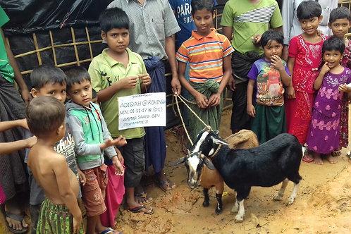 Bangladesh/Rohingya - Goat