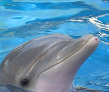 Dolphin face.jpg