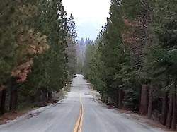 Patricia Barton's Scenic Road