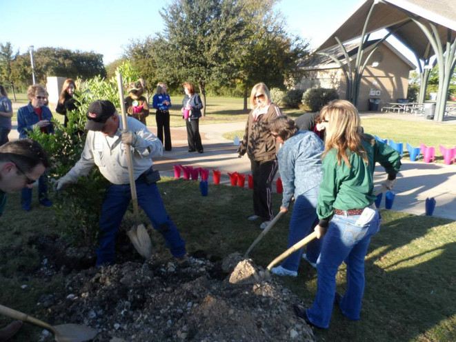 Club members helpingto plant a Mountain Laurel.