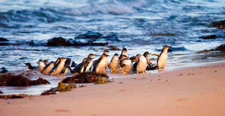 image-Penguin-730x467.jpg