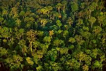 lowland-rainforest-aerial-borneo-ED3VM55