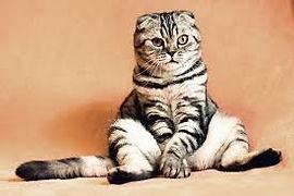 photo cat.jpg