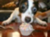DOG 9.jpg