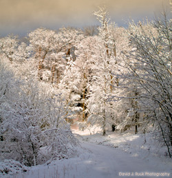 Snow Covered Trees Michigan