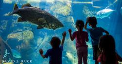Kids touching aquarium