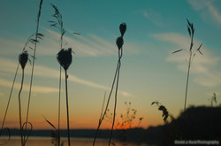 Tall Grass over Duck Lake