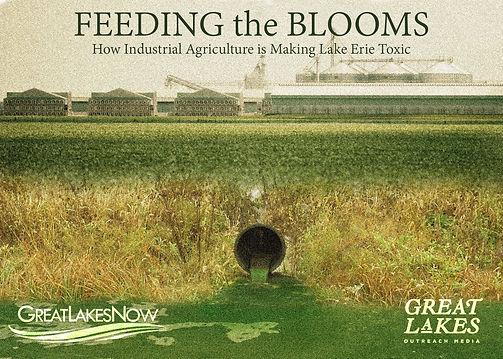 feeding blooms.jpg