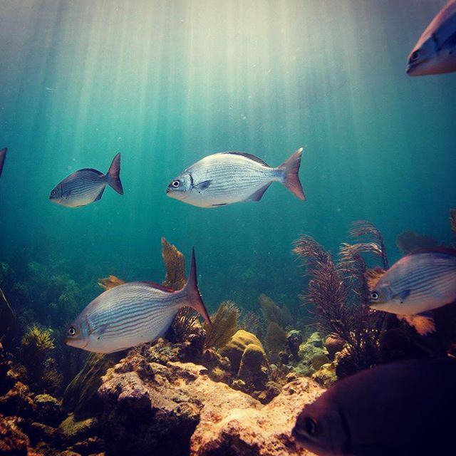 Florida Keys National Marine Sanctuary #findyourpark #fypyes
