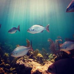 Florida Keys National Marine Sanctuary #findyourpark #fypyes