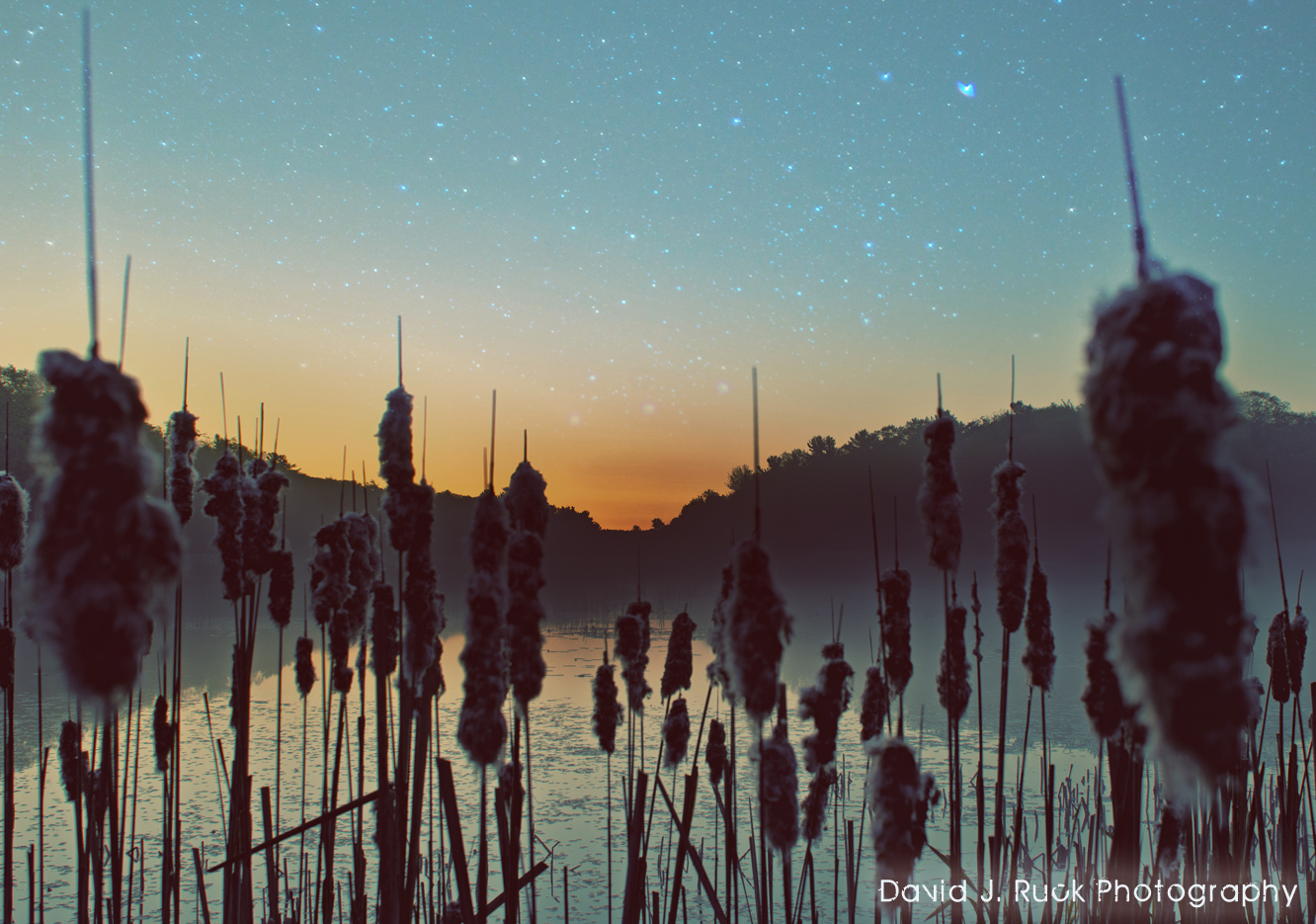 Cat Tails Night Lake
