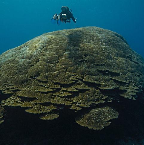Diver explores American Samoa