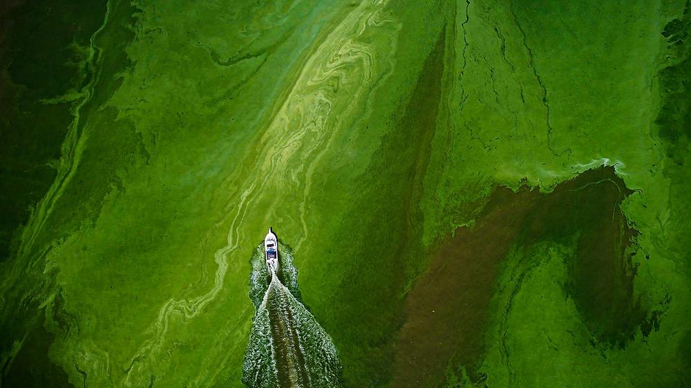 Harmful Algal Blooms on Lake Erie