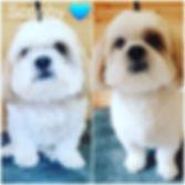 Doodles Dog Grooming Bracknell 079269160