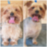 Doodles Dog Grooming Bracknell 07926 916