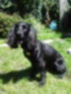 Doodles Dog Grooming 07926 916044