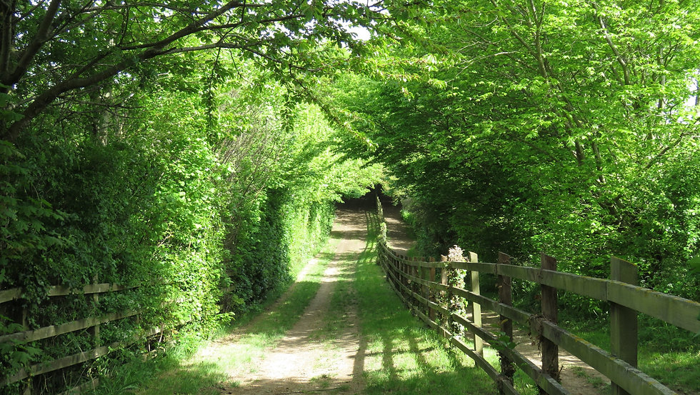 Path in woods with fence.jpg