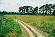path in fields.jpg