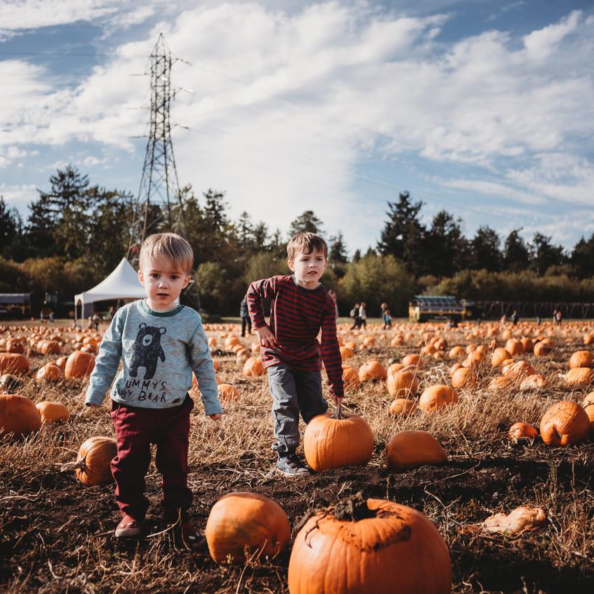 Boys in pumpkin patch