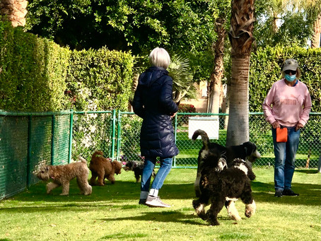 Puppy Playdate at Motorcoach Country Club, California