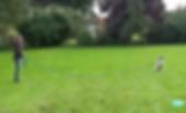 Screen Shot 2020-04-29 at 7.15.30 PM.png