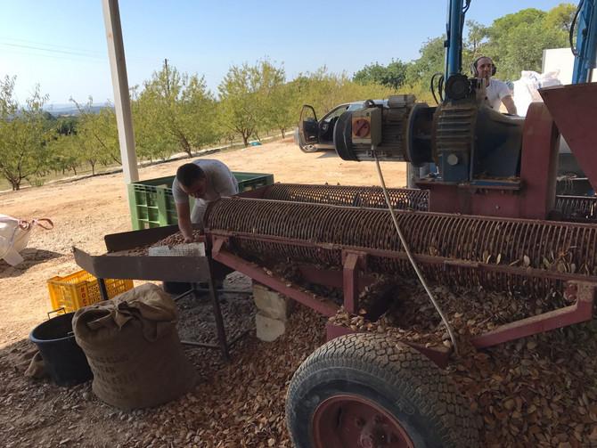 La raccolta di mandorle e olive? Con Busulmona e De Masi è sostenibile