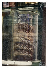 jar of snail kirakrasz.jpg