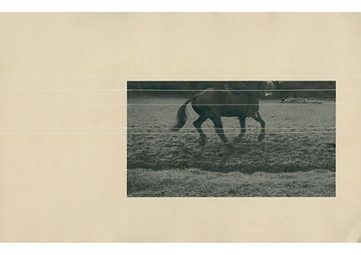 Cage's horse kirakrasz.jpg