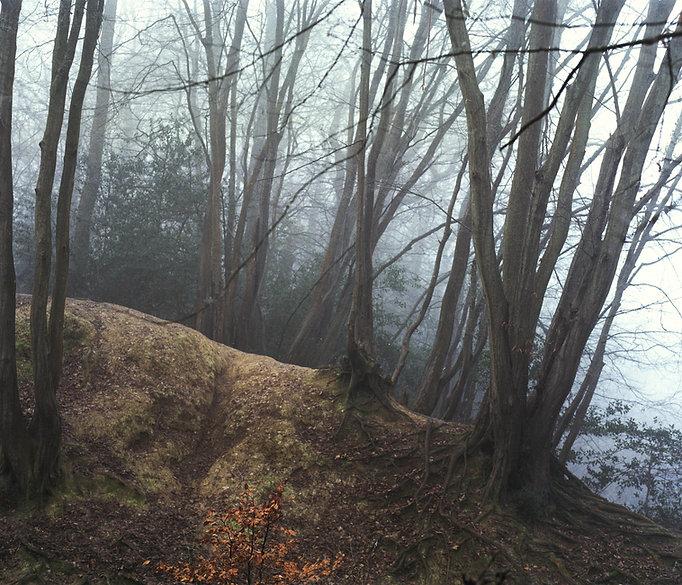 Landscape Kíra Krász